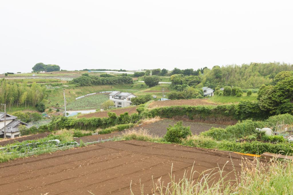 三浦市の畑の風景