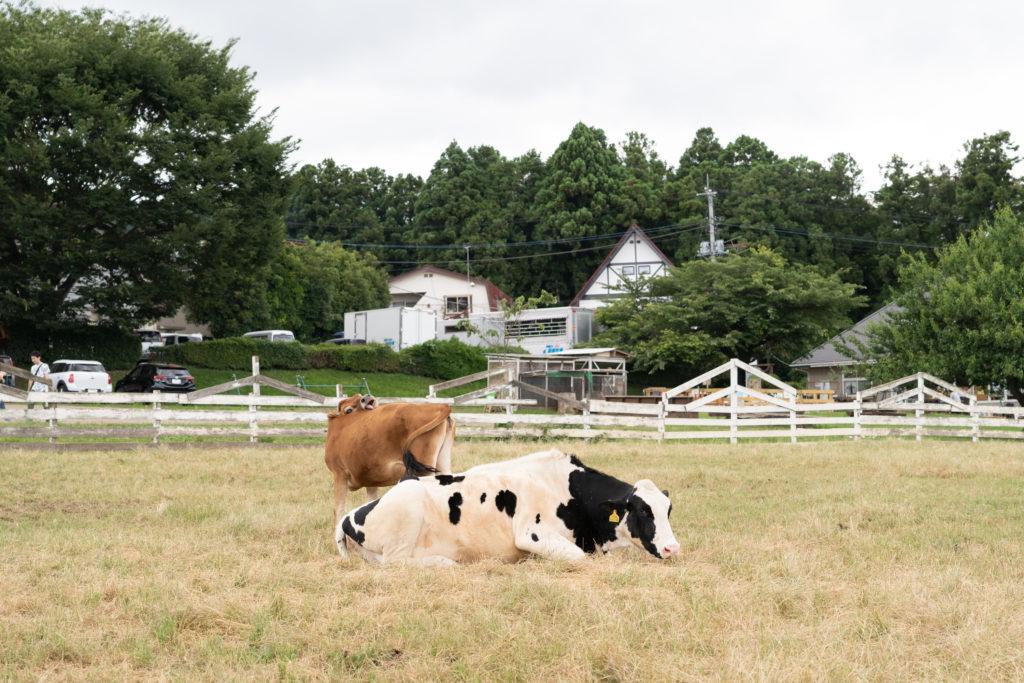 服部牧場の大自然を満喫