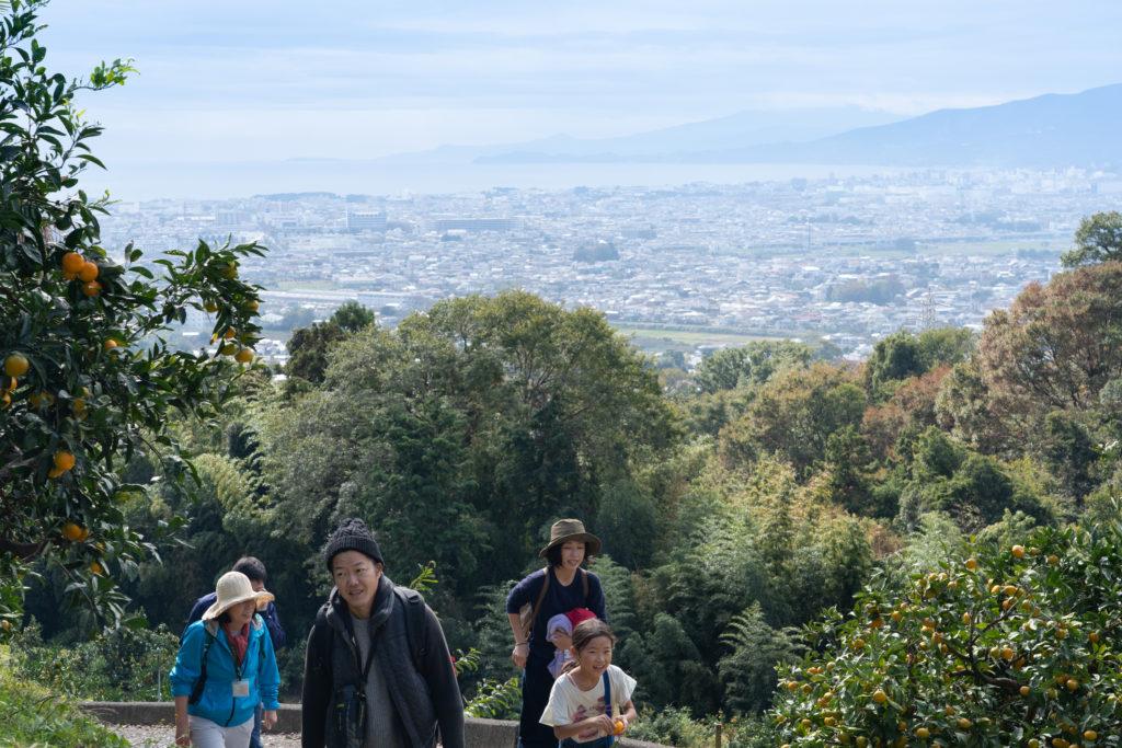 みかん山から見える景色