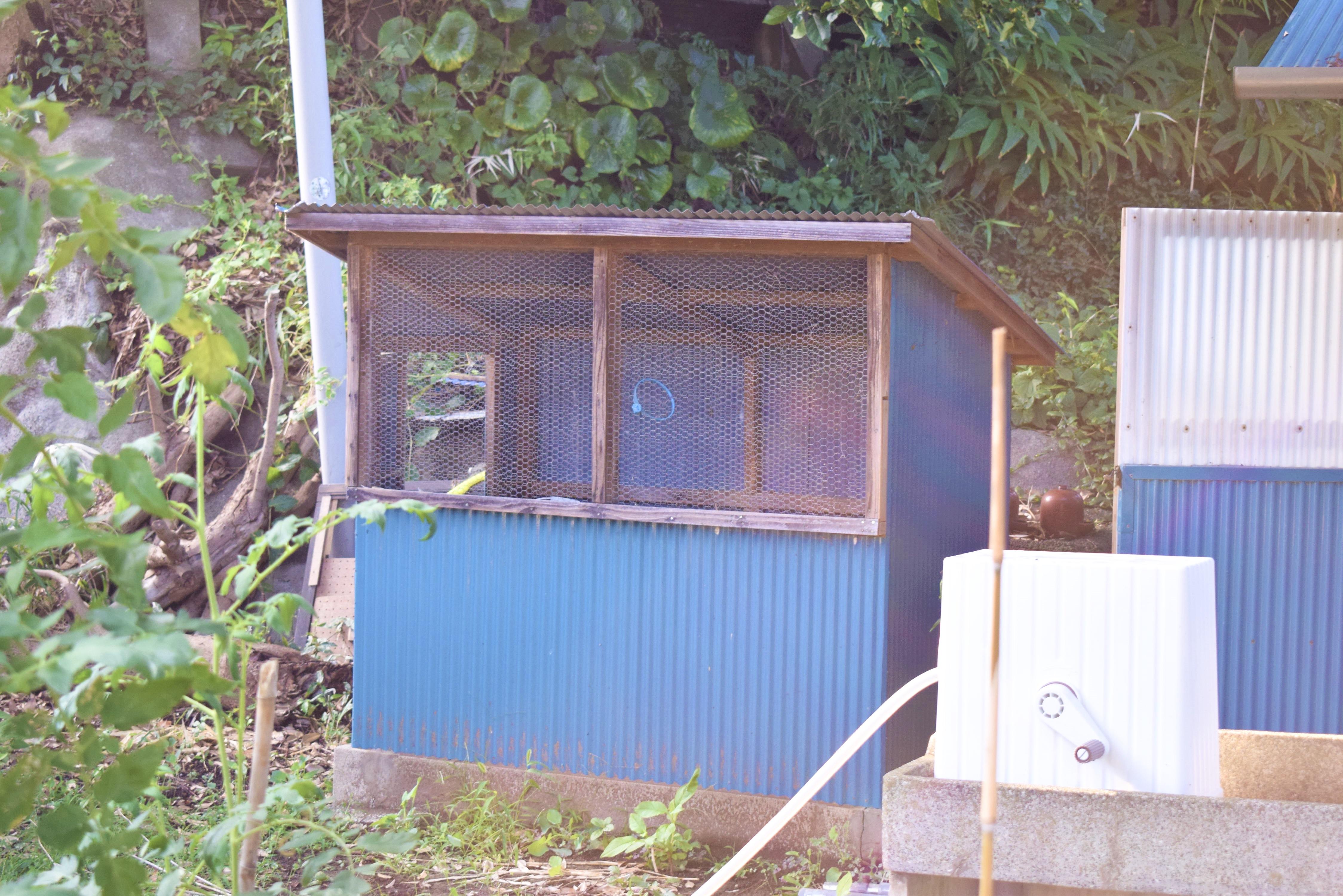 真鶴の松平さん宅にある鶏小屋が移住のきっかけに